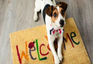BOŚ pierwszym bankiem w Polsce, do którego wejdziesz z psem