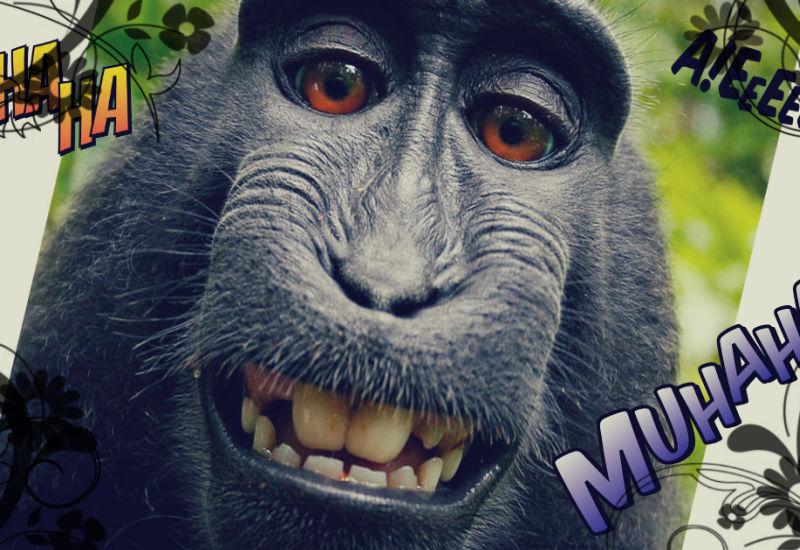 Monkey Selfie - czy małpa może posiadać prawa autorskie?