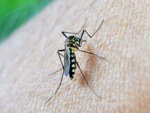 Powstaje globalna sieć wykrywania… komarów