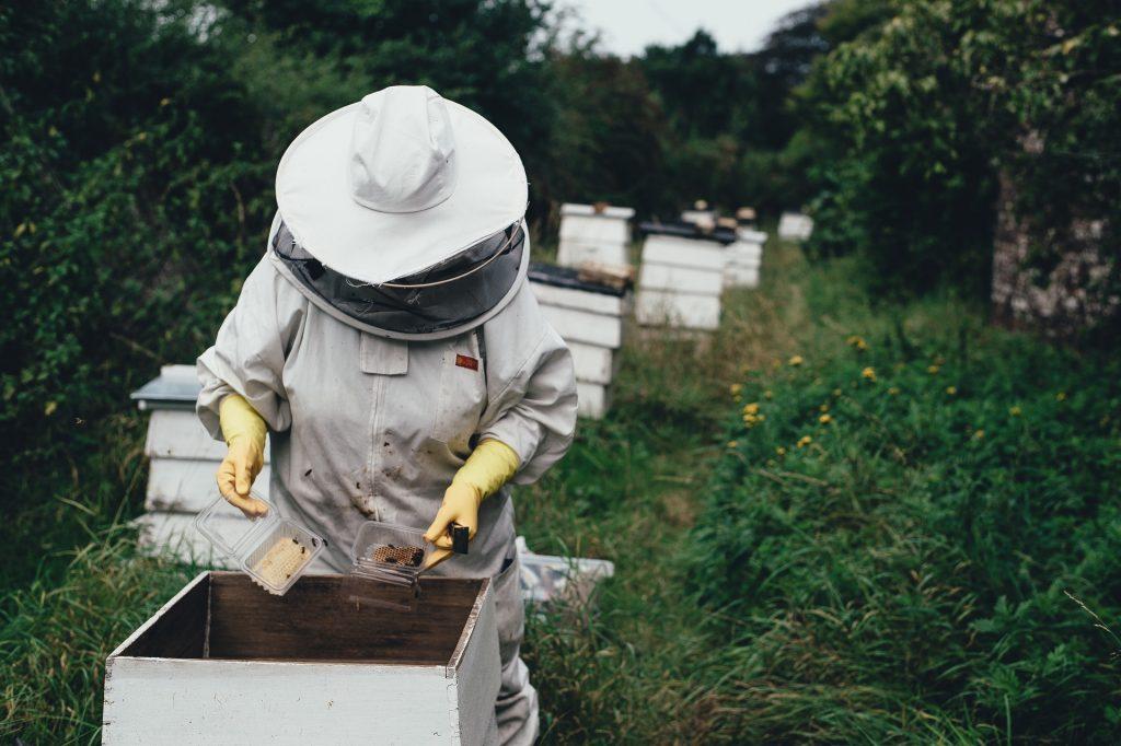 Technologia, która ratuje pszczoły