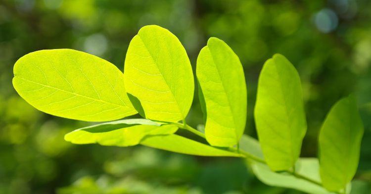 zielone listy zastawne